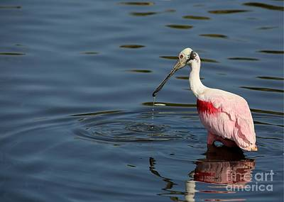 Titusville Photograph - Pink In The Drink by Sabrina L Ryan
