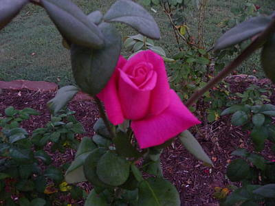 From The Kitchen - Pink in the Gray Morning Light by Darrel Henderson