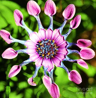 Whimsical Flowers - Pink Indian Painted Daisy by Kathleen Struckle