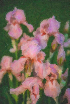 Romanticism Mixed Media - Pink Iris Family by Omaste Witkowski