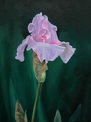 Painting - Pink Iris by Synnove Pettersen