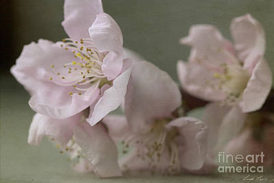 Photograph - Pink Is The Color Of Happiness by Linda Lees