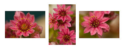 Art Print featuring the photograph Pink Joy by Trevor Chriss