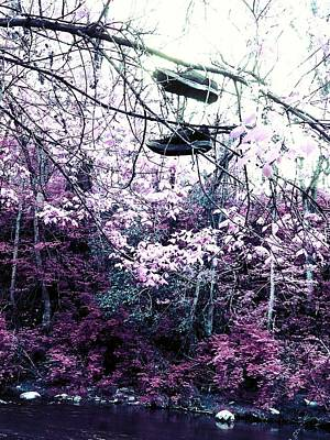 Photograph - Pink by Kiara Reynolds