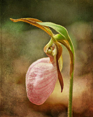 Photograph - Pink Lady Slipper by TnBackroadsPhotos