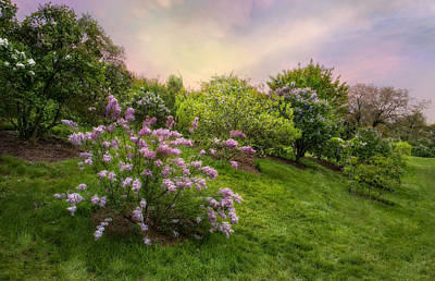 Photograph - Pink Lilac by Robin-Lee Vieira