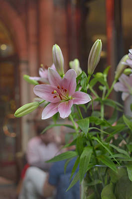 Photograph - Pink Lily Boquet by Marianne Campolongo