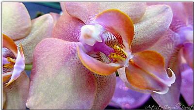 Pink Limonaid Orchids Macro Art Print by Danielle  Parent