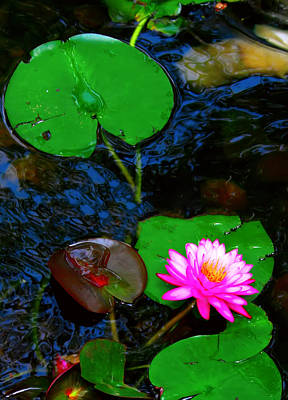 Photograph - Pink Lotus And Lily Pad 2 by Kara  Stewart