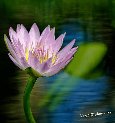 Purple Petals Lotus Flower Impressionism Art Print