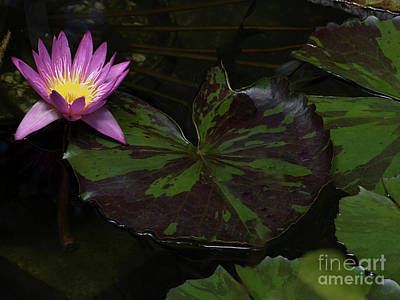 Pink Lotus Flower On Heart Shape Lily Pad Art Print by Linda Matlow