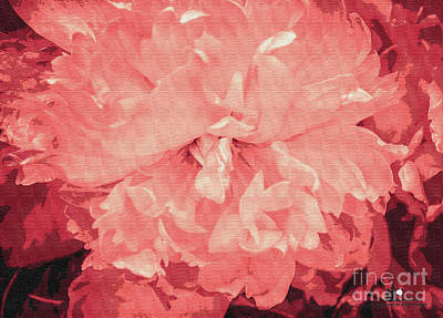 Photograph - Pink Macro Flower by Grace Grogan