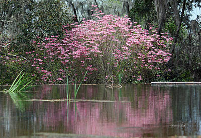 Photograph - Pink Magnificence by Suzanne Gaff