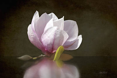 Photograph - Pink Magnolia Blossom by Ann Powell