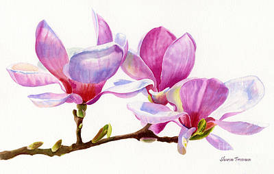 Magnolia Blossom Painting - Pink Magnolia Blossoms On A Branch by Sharon Freeman