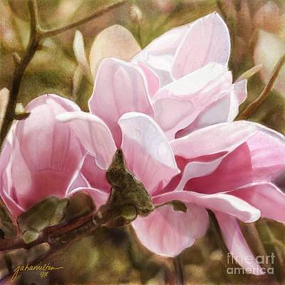 Pink Magnolia One Art Print by Joan A Hamilton