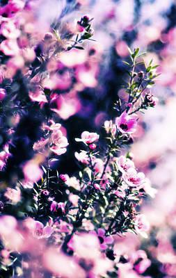 Pink Manuka Flowers Art Print by motography aka Phil Clark