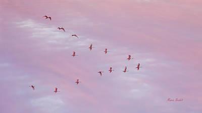 Photograph - Pink by Maria Nesbit