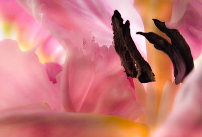 Girls In Pink Photograph - Pink Mellow Yellow by Karen Wiles