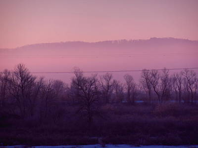 Photograph - Reduced Pink Mist Morning by Wild Thing