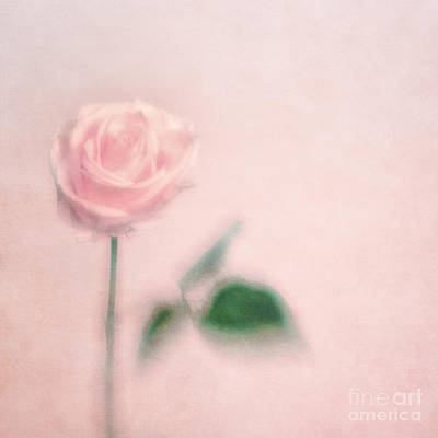 Single Flower Photograph - pink moments II by Priska Wettstein