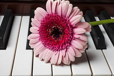 Piano Photograph - Pink Mum On Piano Keys by Garry Gay