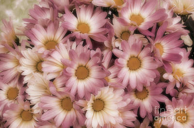 Photograph - Pink Mums by Jim And Emily Bush