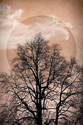 Photograph - Pink Mystery Moon by Patricia Strand