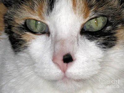 Photograph - Pink Nose by Oksana Semenchenko
