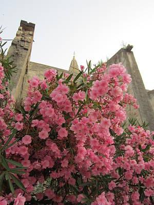 Pink Oleander Art Print by Pema Hou