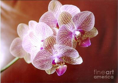 Photograph - Pink Orchid 2 by Rod Ismay