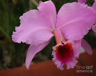 Photograph - Pink Orchid by Bill Woodstock