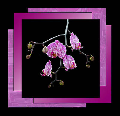 Framed Orchid Spray Art Print by Patti Deters