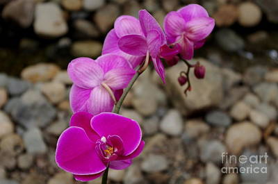 Colorful Button - Pink Orchids by Erin Baxter