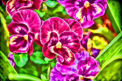 Photograph - Pink Pansies by Jeanne May