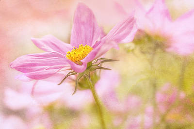 Photograph - Pink Pastel by Mary Jo Allen