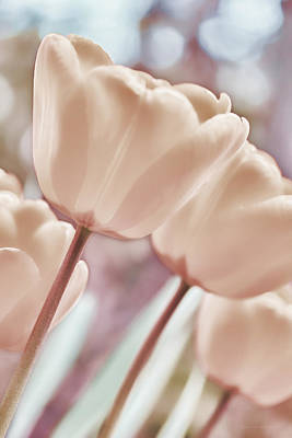 Photograph - Pink Pastel Tulips In The Garden by Jennie Marie Schell