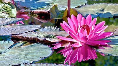 Photograph - Pink Pastel Water Lily by Carol Montoya