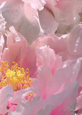 Summer Photograph - Pink Peonies 2  by Cindy Greenstein