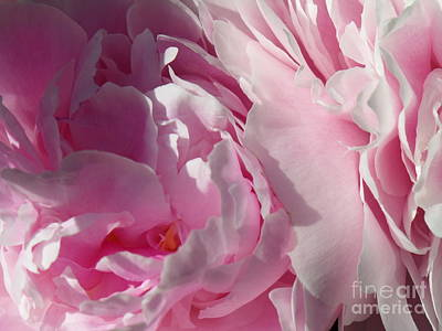 Photograph - Pink Peonies by HEVi FineArt