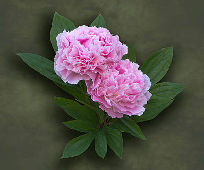 Photograph - Pink Peonies by Jane McIlroy