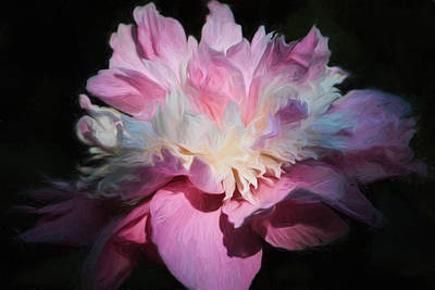 Photograph - Pink Peony by Donna Kennedy