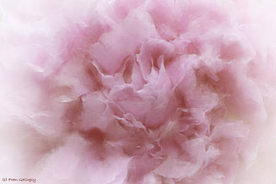 Photograph - Pink Peony by Fran Gallogly