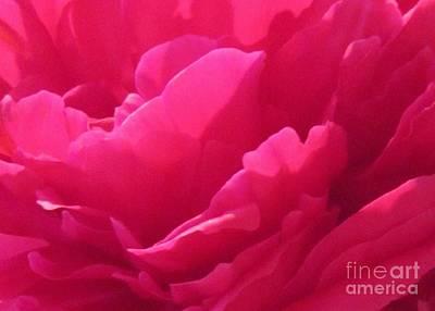 Peony Painting - Pink Peony Petals by John Clark