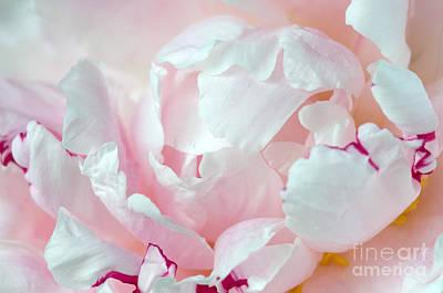 Photograph - Pink Peony by Sarah Schroder