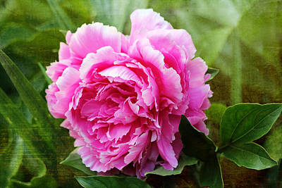 Digital Art - Pink Peony by Trina  Ansel