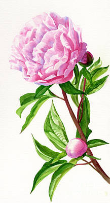 Pink Peony With Leaves Original