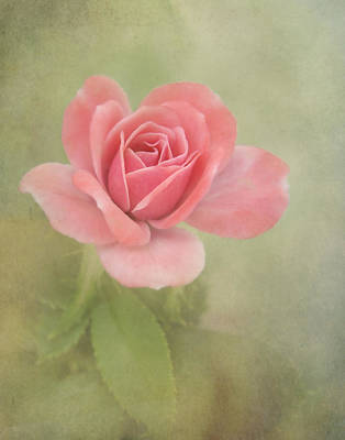 Photograph - Pink Perfection by David and Carol Kelly