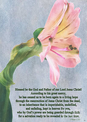 Photograph - Pink Peruvian Lily With Scripture by Sandra Clark