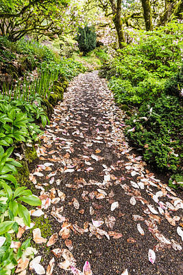 Photograph - Pink Petal Pathway Perspective by Priya Ghose